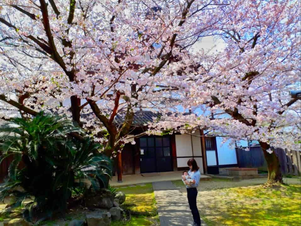 Snapseed編集後の桜