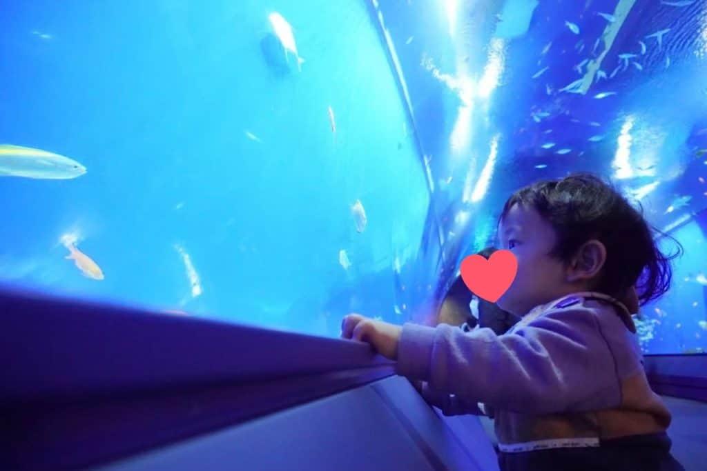 ファーストシューズ 水族館